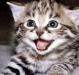 Как видят кошки?