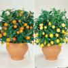 Как вырастить ананас, лимон, авокадо из косточки?