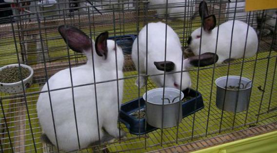 Как сделать клетку для кроликов?