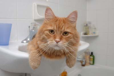 Как купать кота?