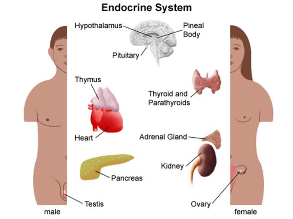 Как восстановить гормональный фон?